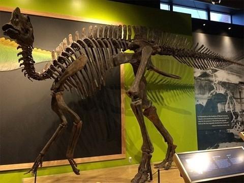 Диагноз через 70 миллионов лет после смерти