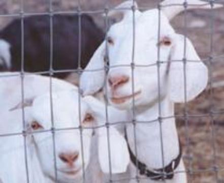 Еврокомиссия хочет, чтобы Франция ответила за козлов