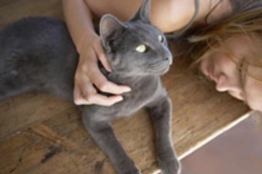 Кошки [защищают от инфаркта]