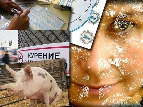 Что стоит за креативностью и как свиньи помогут больным детям