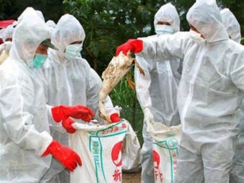 В Китае от «птичьего» гриппа [умер каждый третий заболевший]