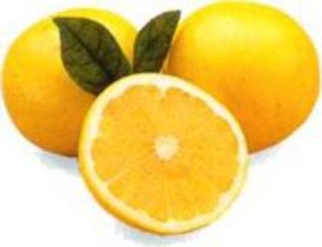Грейпфрутовым соком нельзя запивать таблетки