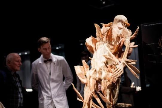 Выставка. «Тайны тела. Вселенная внутри нас»