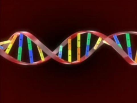 Риск отторжения [будут определять по донорской ДНК в крови]