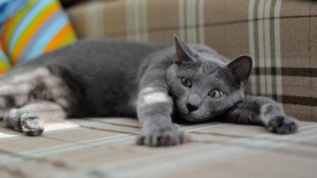 В США процветает черный рынок «кошачьей» версии препарата от COVID-19