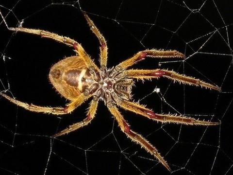 Откуда у вас появился страх змей и пауков, и почему он оказался полезным