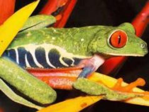 Желудок будут лечить змеями и лягушками