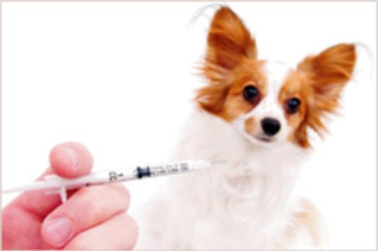 В Москве началась массовая [вакцинация домашних животных]
