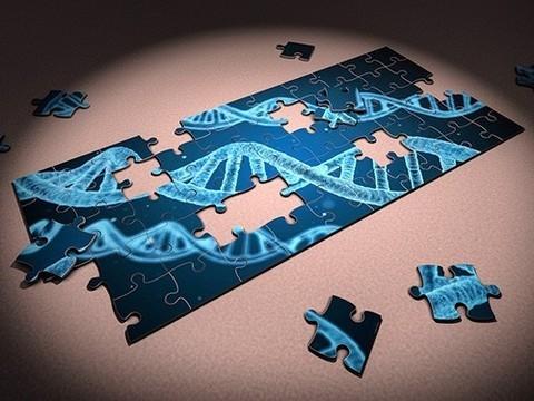 «Пока мы еще не знаем, за что отвечает большая часть генетического аппарата»