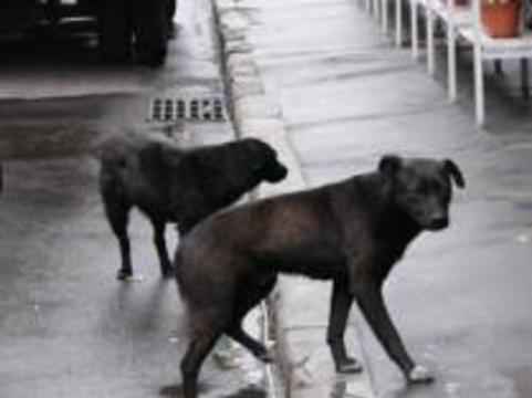 Бродячих собак в Москве отстреливать не будут