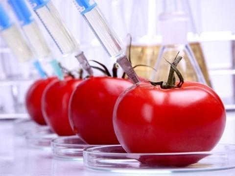 В США официально признали безопасность генетически модифицированных продуктов