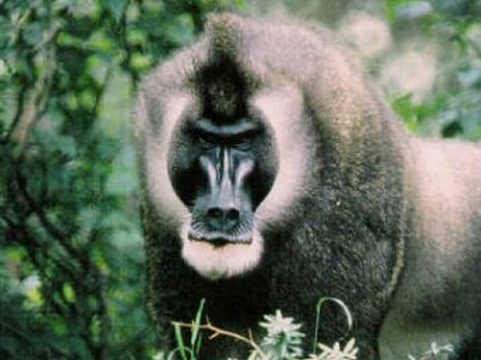 """Ученые состарили """"обезьяний ВИЧ"""" [на 100 тысяч лет]"""