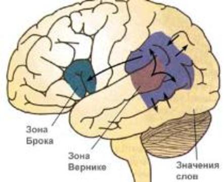 """Мозг способен """"перепрограммировать"""" сам себя"""