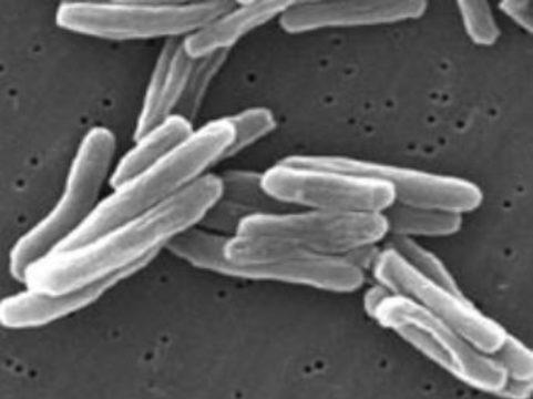 Американские ученые предложили лечить туберкулез [препаратами от болезни Паркинсона]