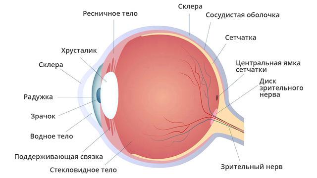 Надежда на зрение: новое исследование