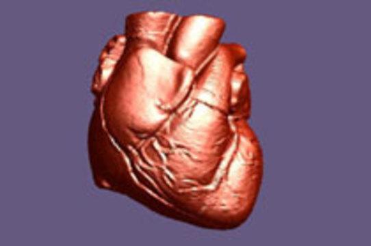 Клетки эпикарда восстановят сердце после инфаркта