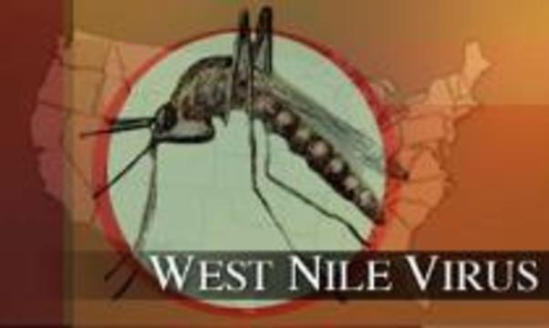 Число погибших от лихорадки западного Нила в США достигло 16 человек