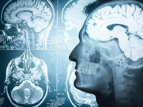 Мозг, иммунитет и память определяют одни и те же гены