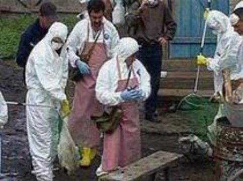 Птицефабрики России переведены на закрытый режим работы