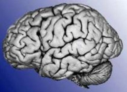 Шизофрения - следствие поломки микротрубочек в мозгу