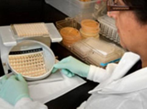 В США от грибкового менингита [умерли 28 человек]