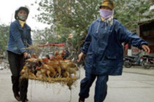 Индонезия по-прежнему отказывается делиться образцами [вируса птичьего гриппа]