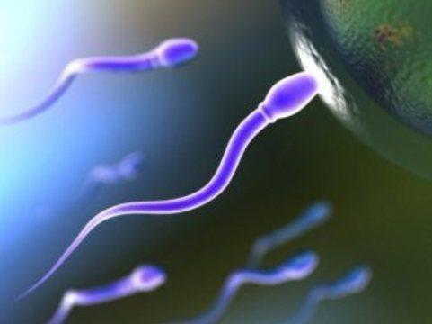Британские ученые сравнили сперматозоиды [с участниками автогонок]