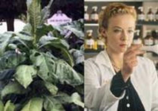 Растения-мутанты заменят фармацевтов
