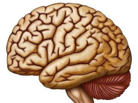 Правое полушарие мозга участвует в восстановлении речи после инсульта