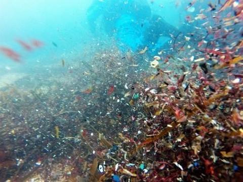 Частицы пластика, загрязняющего окружающую среду, обнаружили в человеческих фекалиях