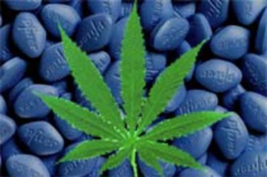 """В Голландии в марихуану [начали добавлять """"виагру""""]"""
