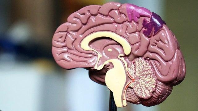 Самые интересные факты о нашем мозге