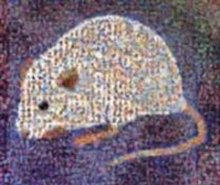 Расшифрован геном мыши: отличие от человека - не более процента