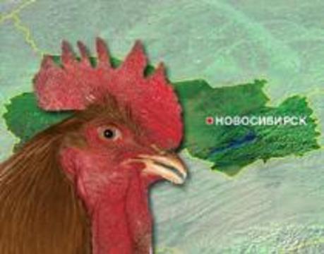 В России обнаружен азиатский птичий грипп