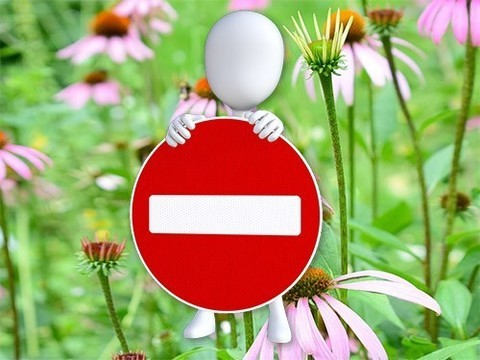 Растительные средства могут быть опасными при беременности