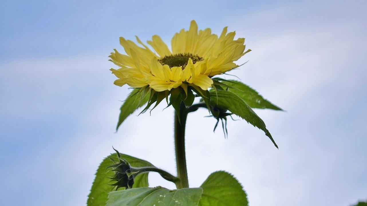 Витамин D: как форма выпуска влияет на эффект или... что нового этой весной?
