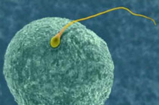 Американский банк спермы предложил клиентам [антикризисные скидки]