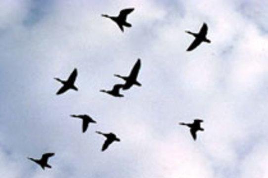 Американские ученые нашли новую разновидность птичьего гриппа