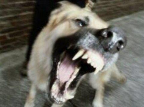 Бешеная собака [покусала 40 человек в Москве]