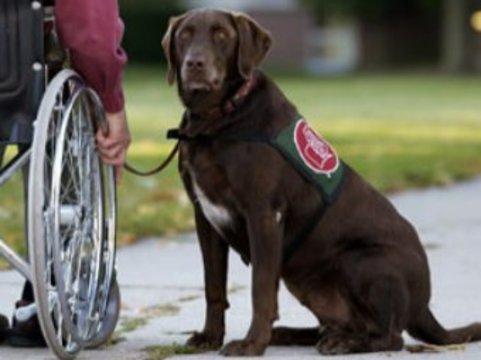 Московским инвалидам предоставят льготы на [лечение домашних животных]