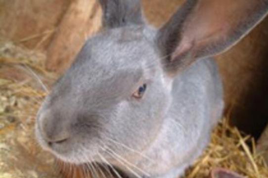 В Белоруссии женщине [пересадили щитовидную железу кролика]