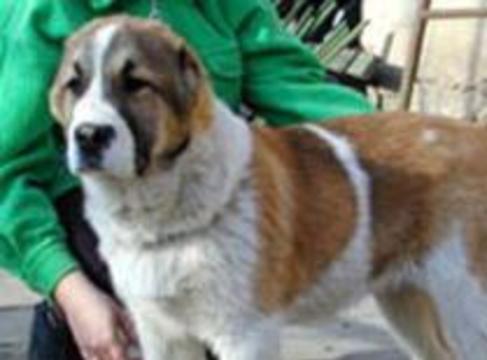 Собаки помогают лечить детей, больных церебральным параличом