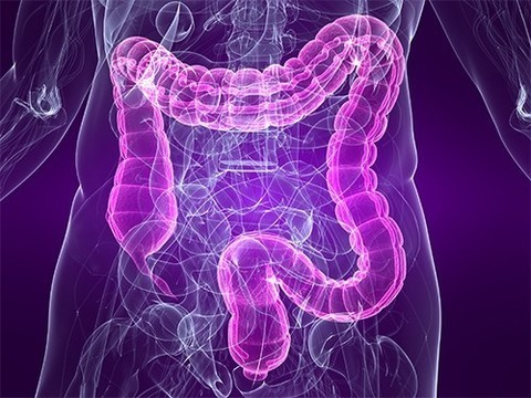 В наборе веса виноват микробиом