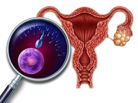 В США начинаются исследования по пересадке матки