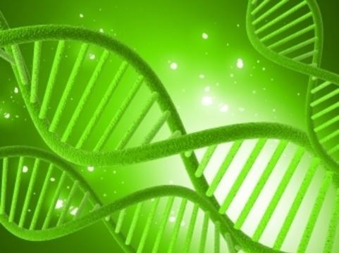 Генетические исследования [помогли обновить классификацию рака груди]