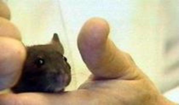 Исследователей будут судить за убийство мышей с помощью Prodigy