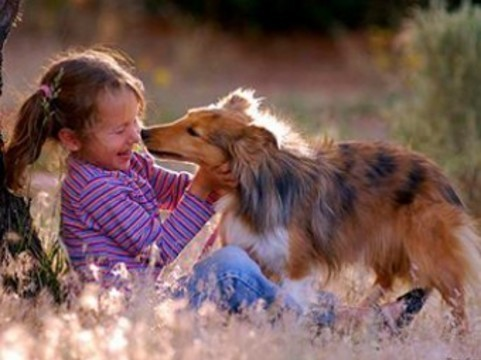 Найдено объяснение [противоаллергическому влиянию собак на детей]