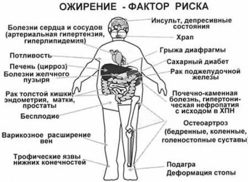 Роспотребнадзор пригрозил сибирякам [массовым ожирением]