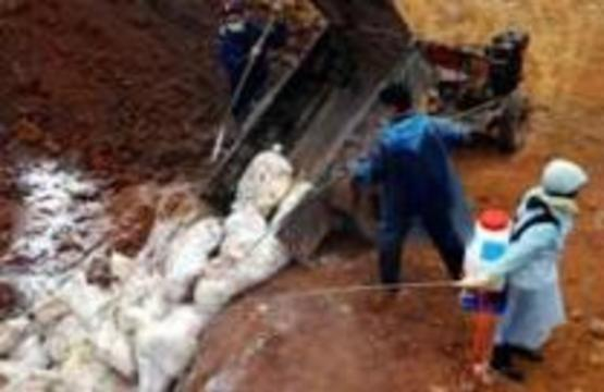"""Вьетнам объявил, что эпидемия птичьего гриппа """"почти"""" под контролем"""