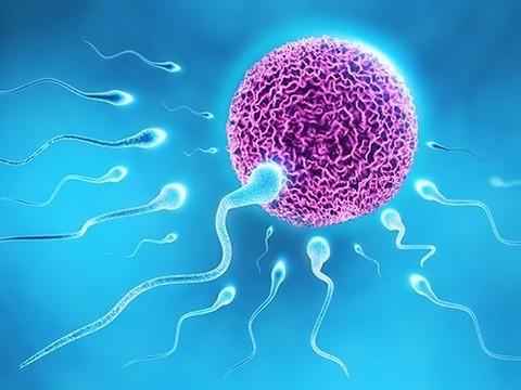 Сперматозоиды вырастили в лаборатории